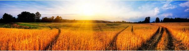 Скинали 'Дорога в поле'