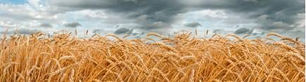 Скинали 'Пшеничное поле'