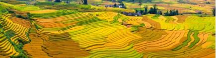Скинали 'Террасные поля в Китае'