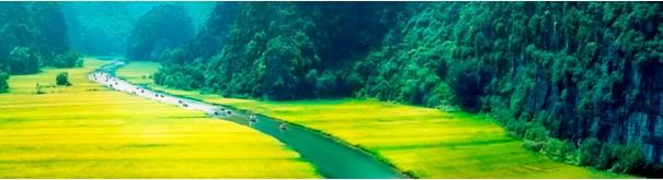 Скинали 'Долина зеленой реки'
