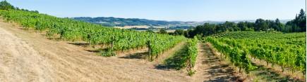 Скинали 'Виноградники Италии'