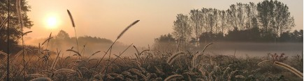 Скинали 'Туманное утро'