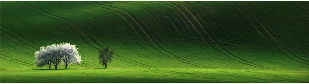 Скинали 'Зеленый луг'