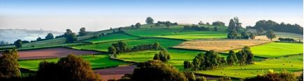 Скинали 'Зеленые холмы'