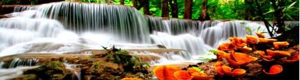 Скинали 'Бурный лесной водопад'