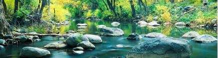 Скинали 'Лесной поток'