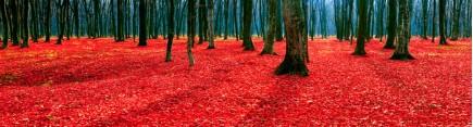 Скинали 'Фантастический лес'