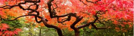 Скинали 'Японский садик'