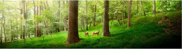 Скинали 'Олени на опушке леса'