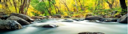 Бурный лесной поток