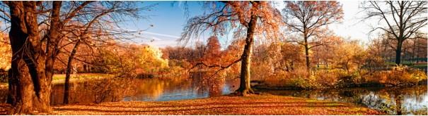 Скинали 'Осенний лесной пейзаж'
