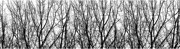 Скинали 'Ветви берез'