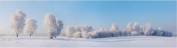 Скинали 'Деревья в снегу'