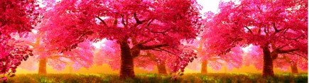 Скинали 'Розовый сад'