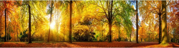 Скинали 'Осень на опушке'