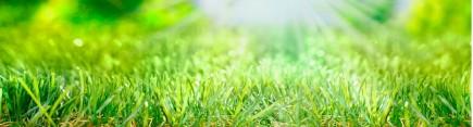 Скинали 'Трава на солнечной лужайке'