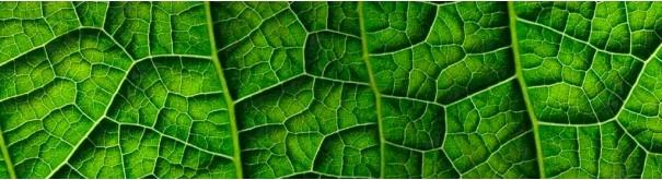 Скинали 'Зеленый лист'