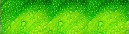 Скинали 'Капли на зеленом листе'