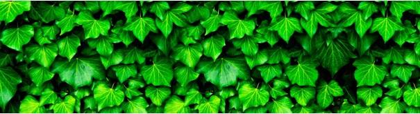 Скинали 'Листья плюща'