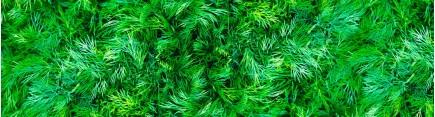 Скинали 'Свежая зелень'