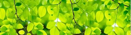 Скинали 'Сквозь зеленую листву'