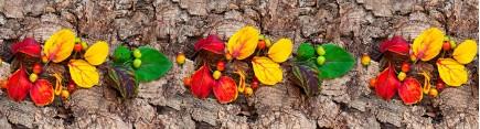 Скинали 'Осенняя композиция'