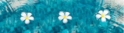 Скинали 'Белые орхидеи в чистой воде'