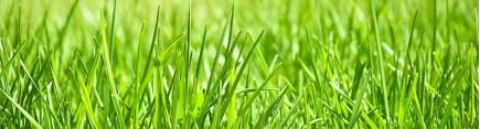 Скинали 'Весенняя трава'