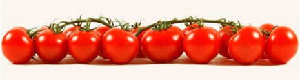 Ветка томатов