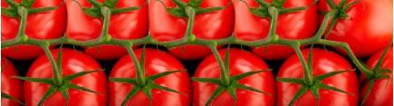 Скинали 'Свежие томаты на ветке'