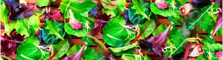 Скинали 'Свежий салат'