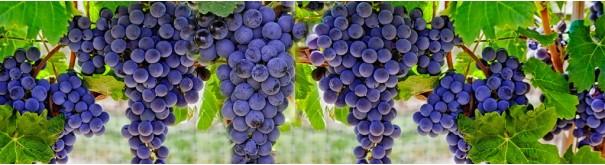 Скинали 'Налитые гроздья винограда'