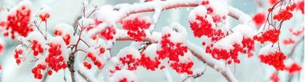 Скинали 'Рябина под снегом'