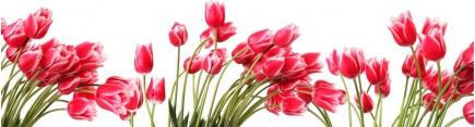 Скинали 'Фон с тюльпанами'