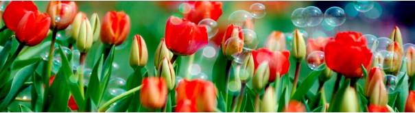 Скинали 'Алые тюльпаны'