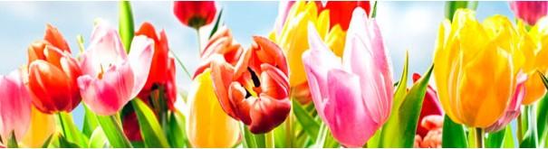 Скинали 'Пол с тюльпанами'