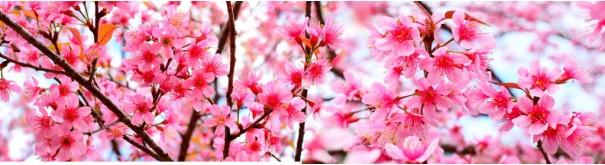 Скинали 'Сакура в цвету'