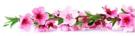 Ветвь цветущей сакуры