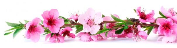 Скинали 'Ветвь цветущей сакуры'