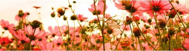 Скинали 'Цветы космеи'