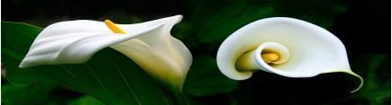 Скинали 'Королевские лилии'