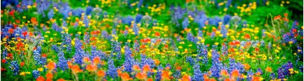 Скинали 'Полевые цветы'