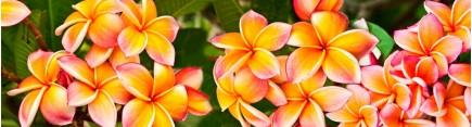 Скинали 'Цветы рудбекии'