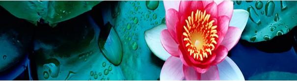 Скинали 'Прекрасная лилия'