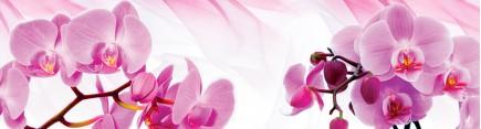 Скинали 'Свежие орхидеи'