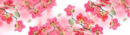 Скинали 'Чудесные орхидеи'