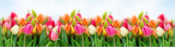 Скинали 'Яркие тюльпаны'