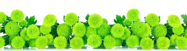 Скинали 'Зеленые хризантемы'
