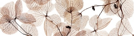 Скинали 'Высохшие листья'