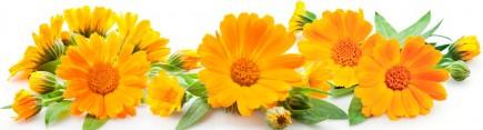 Скинали 'Цветы календулы'